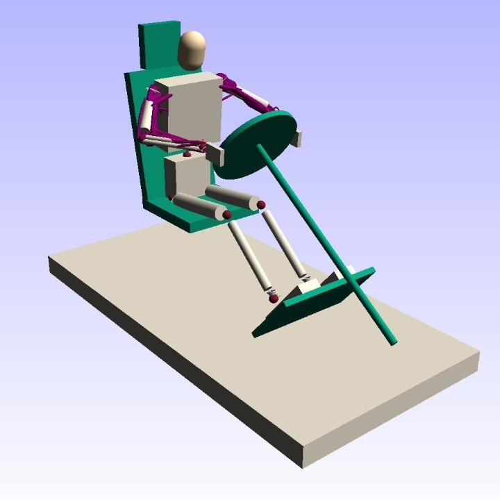 Among other things, the dynamic model is able to simulate muscle control during targeted movements and to evaluate comfort and injury risks.